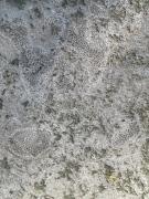 coral stones around the pool