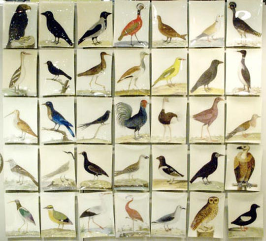 JD science lab birds