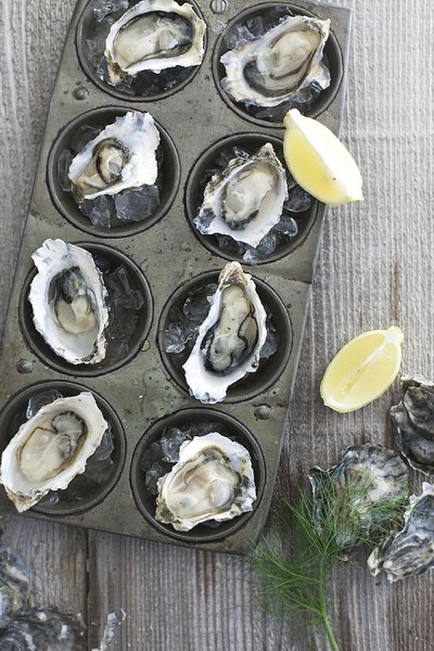 pinterest oyster
