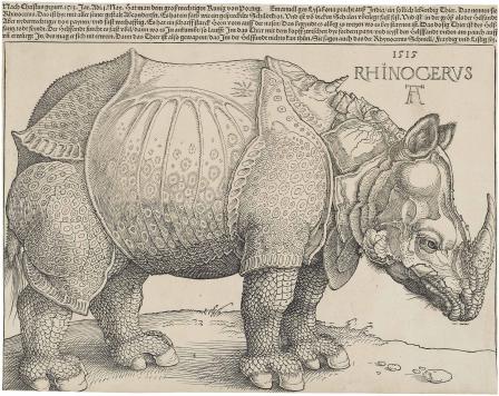 Dürer's Rhinoceros 1515