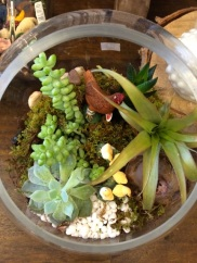 and as no terrarium lives chez moi