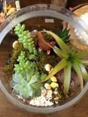 and as no terrarium lives chez moi