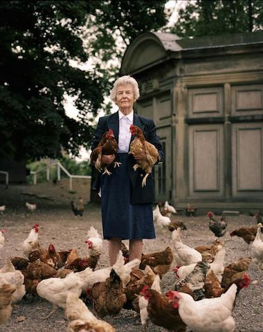 duchessofdevonshire chickens