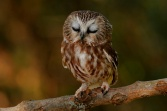owl death and taxes mag