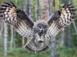 owl globe views
