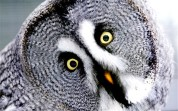 owl the telelgraph uk