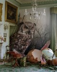 owl Tim walker