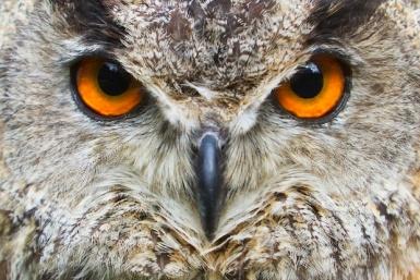 owl washingtonian