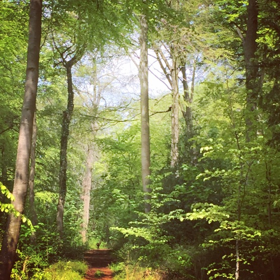 Wild woods...