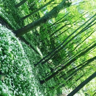Wild woods in spring